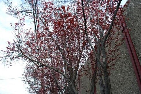 GilmanStreet,BerkeleyCA-Feb27,2009.1529.14pm.jpg