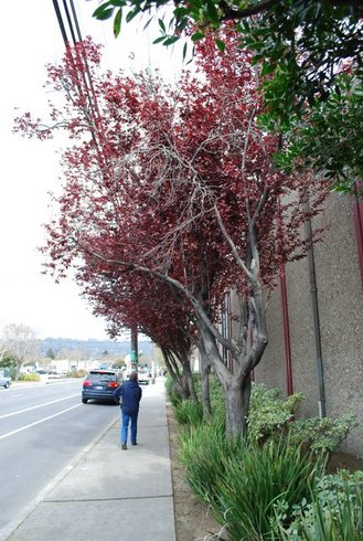 March21,2009BerkeleyCA1617.02pm.jpg